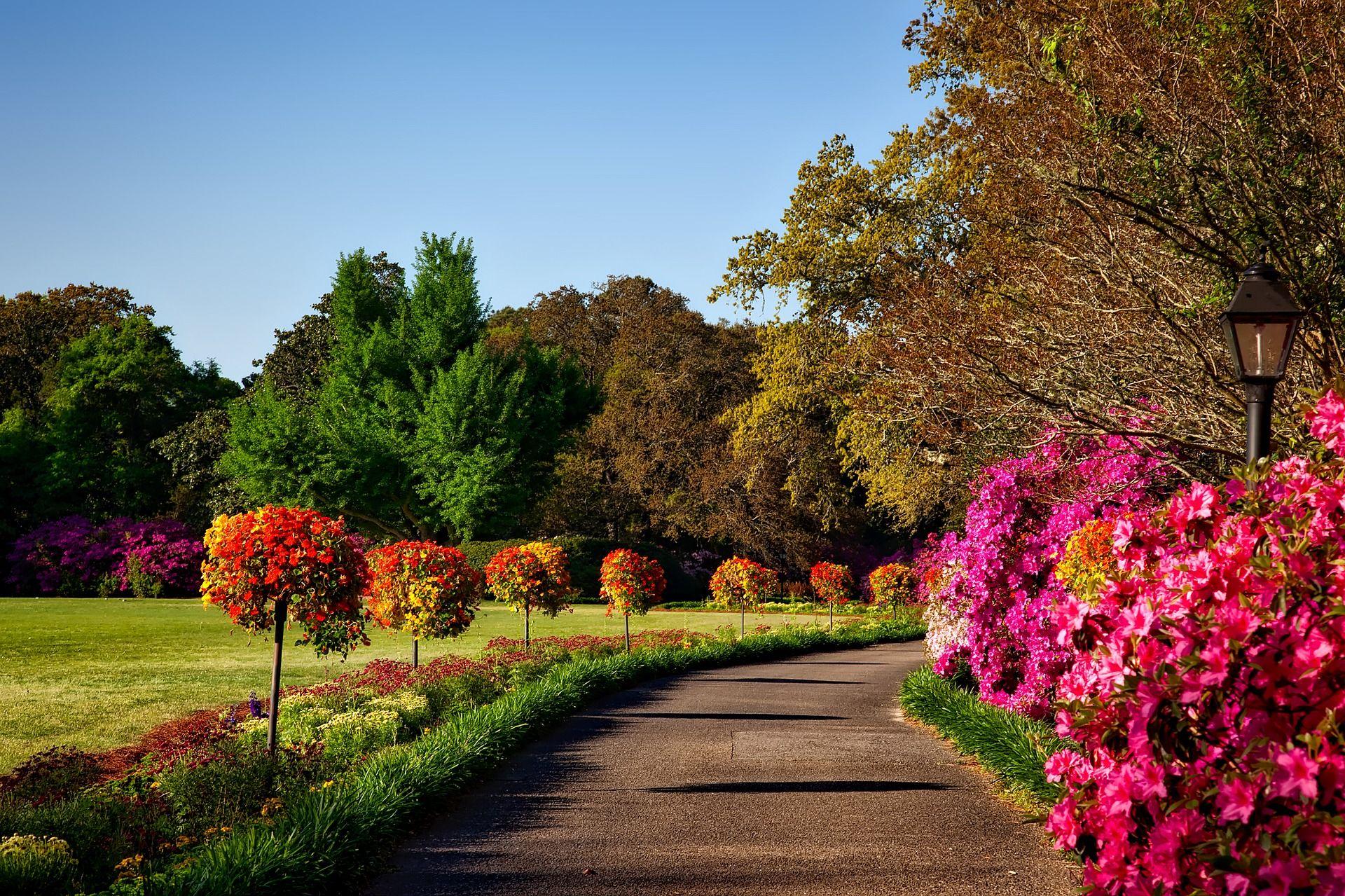 Weight Loss Diets Pinterest Gardening Services Flowering Shrubs