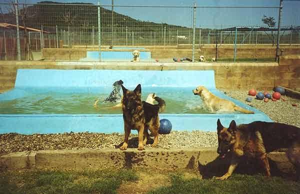 Dog Day Care Providers dogs dog dogcare dogdaycare