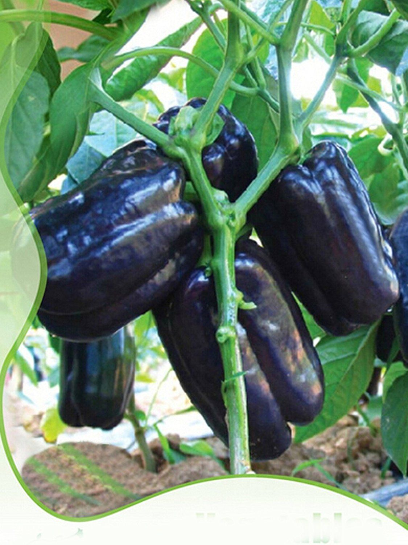 Best Garden Seeds Rare Anhui dark purple