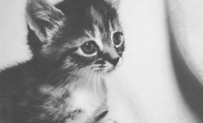 Cat Lovers dating website