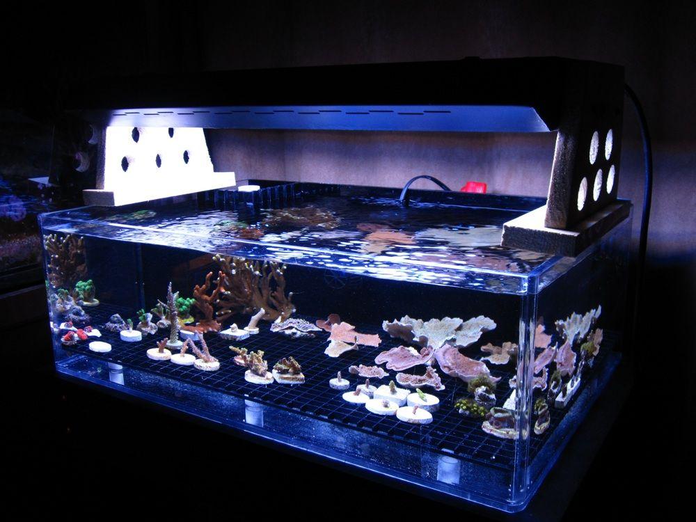 how to set up saltwater aquarium video