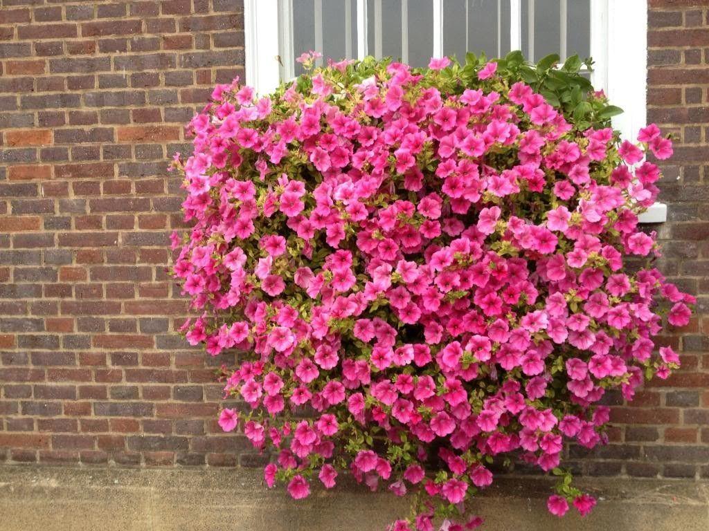 Fiori Da Balcone Perenni fiori da balcone: consigli pratici per un balcone fiorito