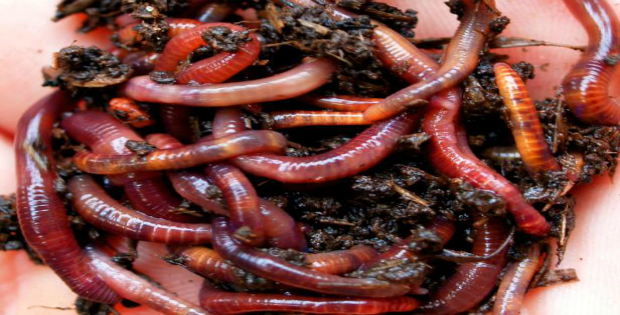 6 Simple Must Have Hacks to Super Worm Composting Indoors