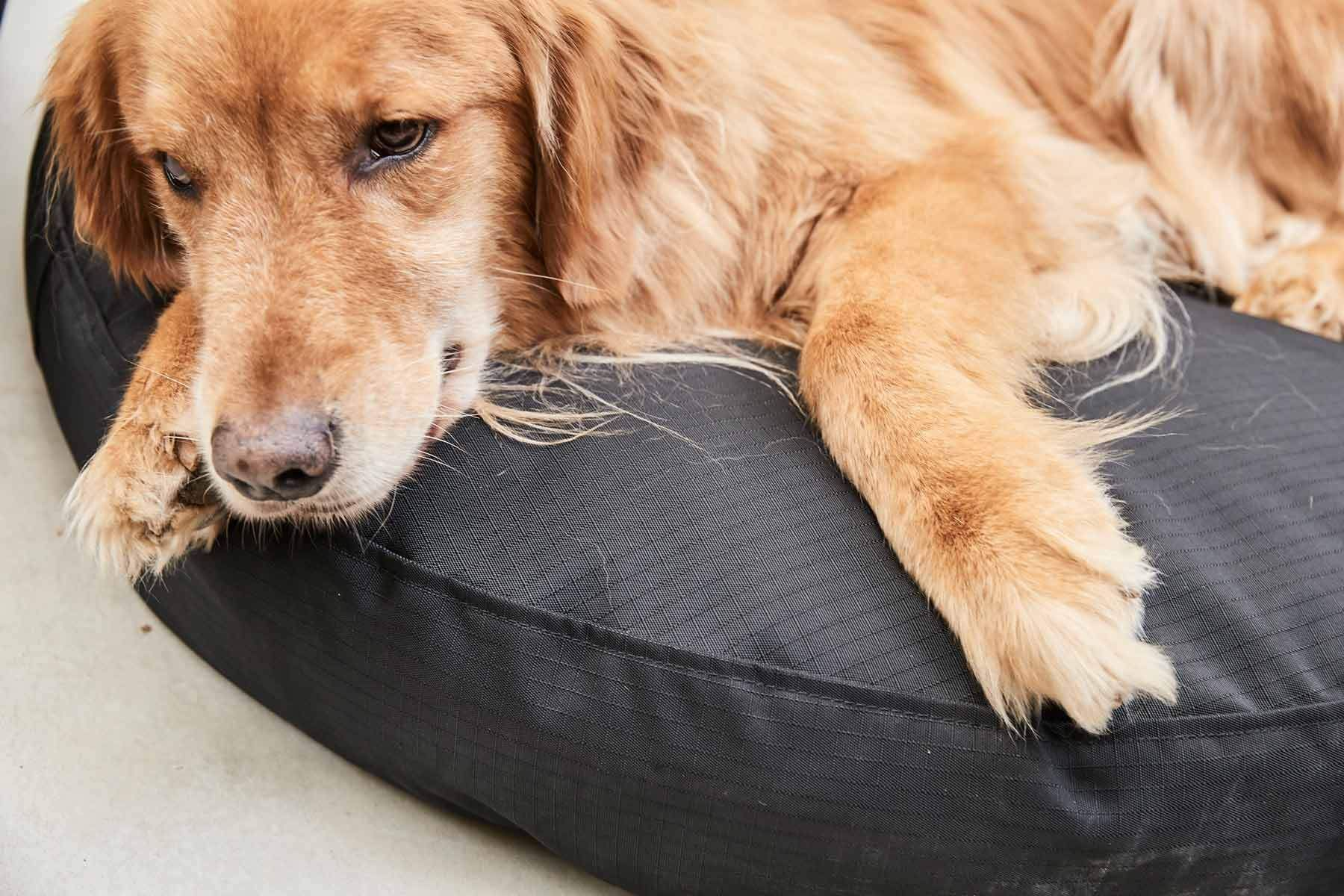 Tough Round Nesting Dog Bed™ Dog bed, Dogs, Marine blue