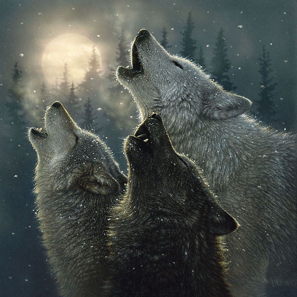Grey Wolf With Blue Eyes Gray Wolf Animals Blue Eyes Hot Kool Wolves Pictures Wolf Spirit Animal Wolf Painting Wolf Howling Best of pictures of gray wolves howling