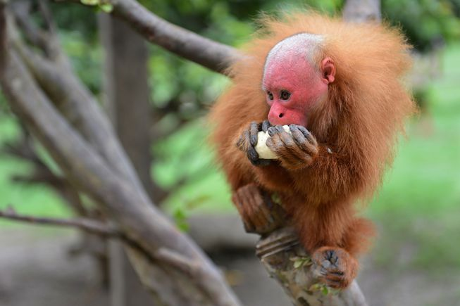 11 Fascinating Facts About Monkeys | Monkey pictures, New ...