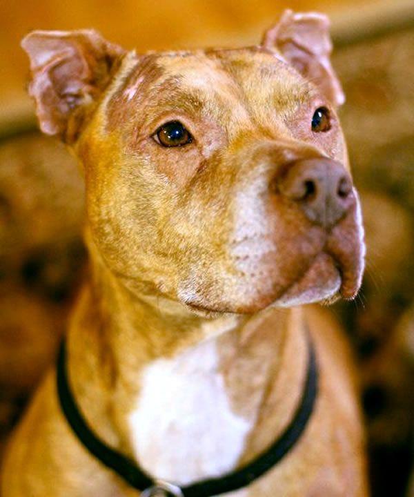 Louis Montgomery Al I M Not A Monster Pitbulls Love Pet Pets