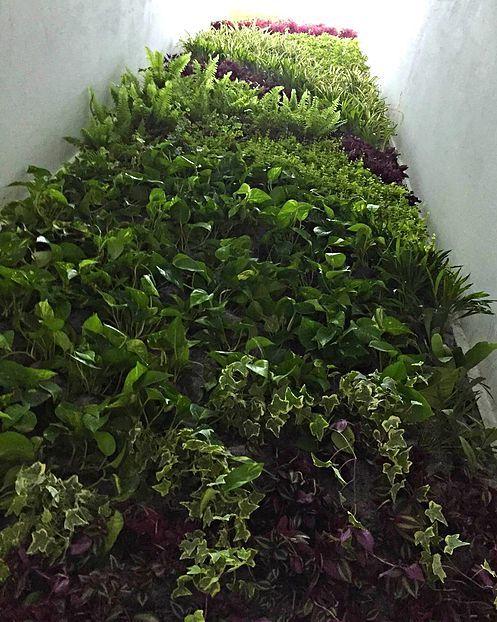 Jard n vertical fachada vegetal ecoyaab jardines for Muros y fachadas verdes jardines verticales
