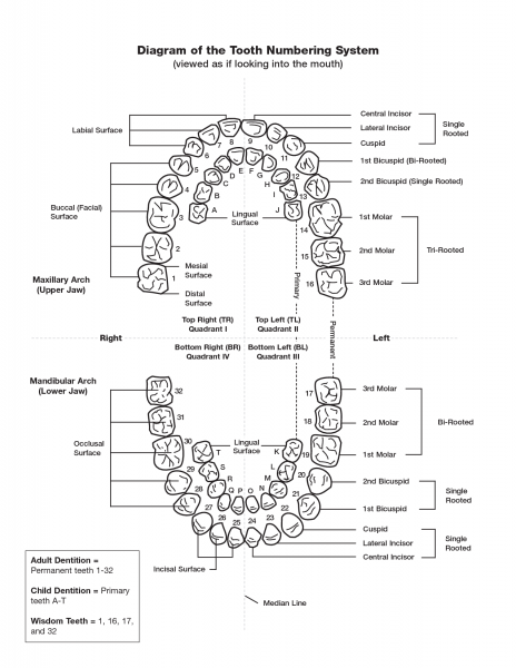 Dental Numbering Of Teeth Diagram
