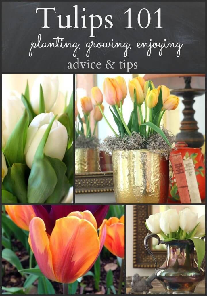 Tulips 101 Planting Growing Enjoying Planting Tulips