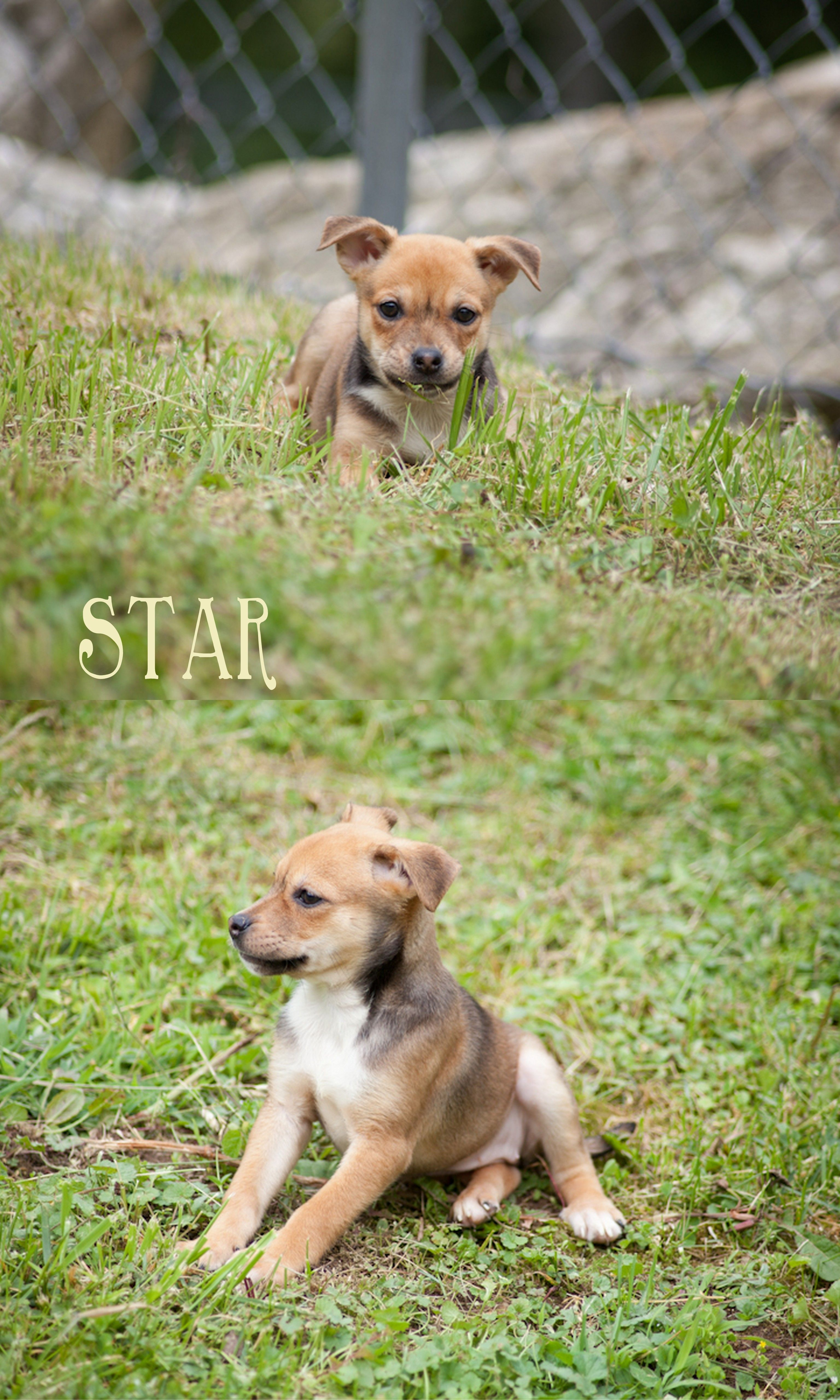 Adopt plantain on animals animal rescue dogs