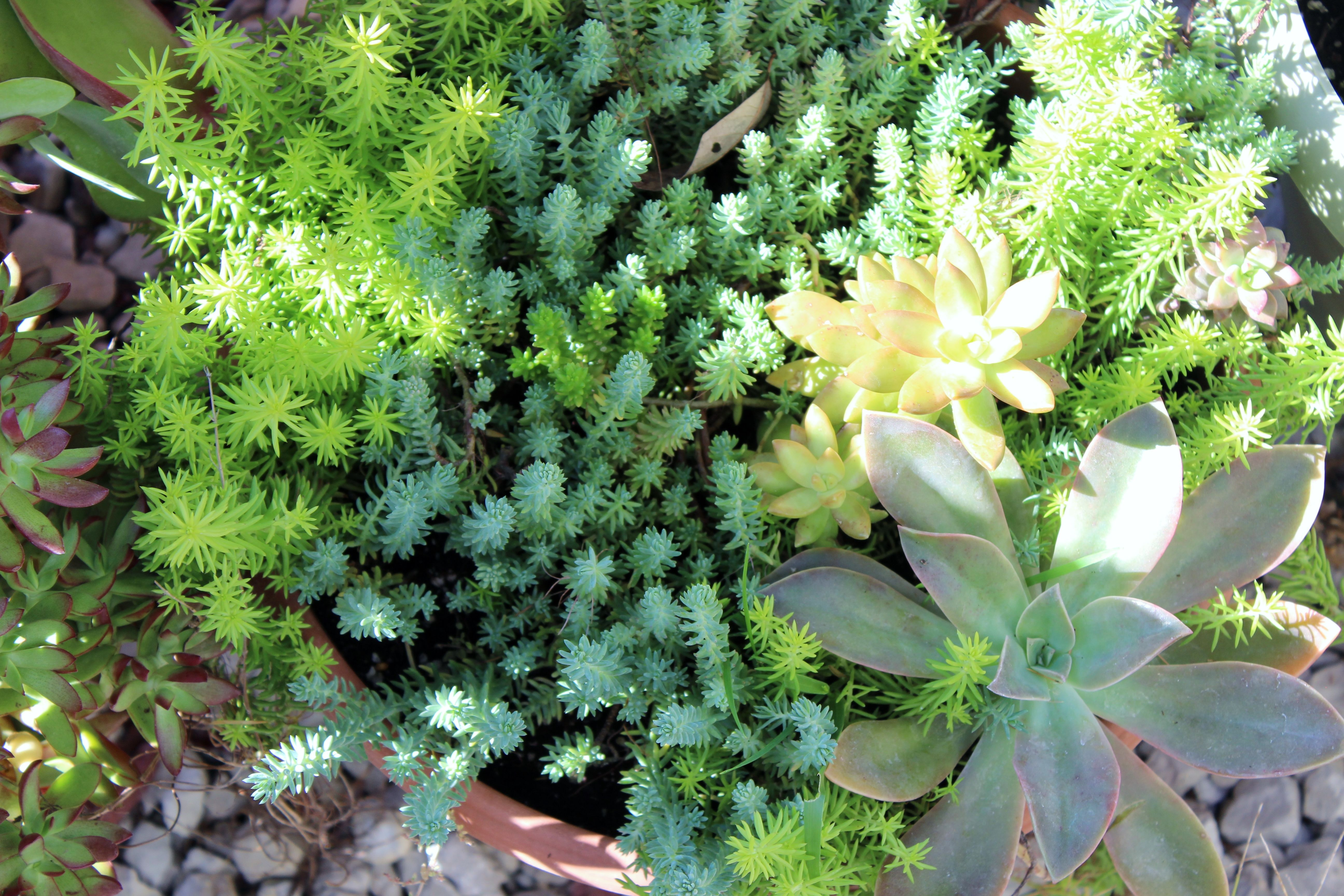 Succulents add so much color and texture to the winter greenhouse...I am going to learn to propagate them so I have more come spring!