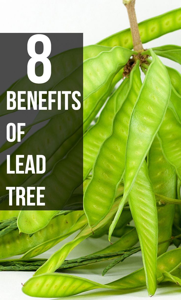 8 Amazing Benefits Of Lead Tree For Your Skin, Hair And Health