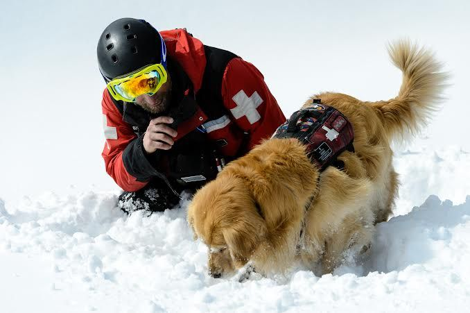 Vail S Canine Employees Rescue Dogs Working Dogs