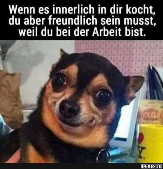 Besten Bilder Videos Und Spruche Und Es Kommen Taglich Neue Lustige Facebook Bilder Auf Debeste De H Lustige Hund Meme Lustige Tiermemes Lustige Humor Bilder