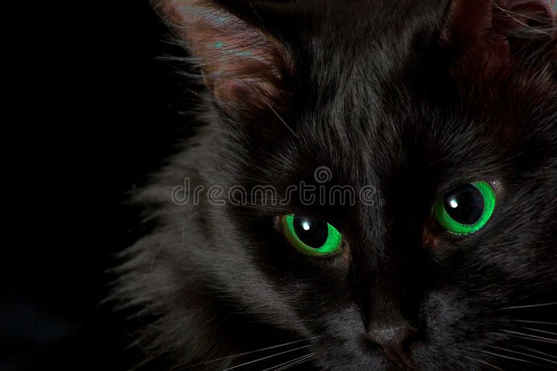 Black Cat With Green Eyes On A Black Background Aff Green Cat Black Background Black Ad Black Cat Cat Stock Cats