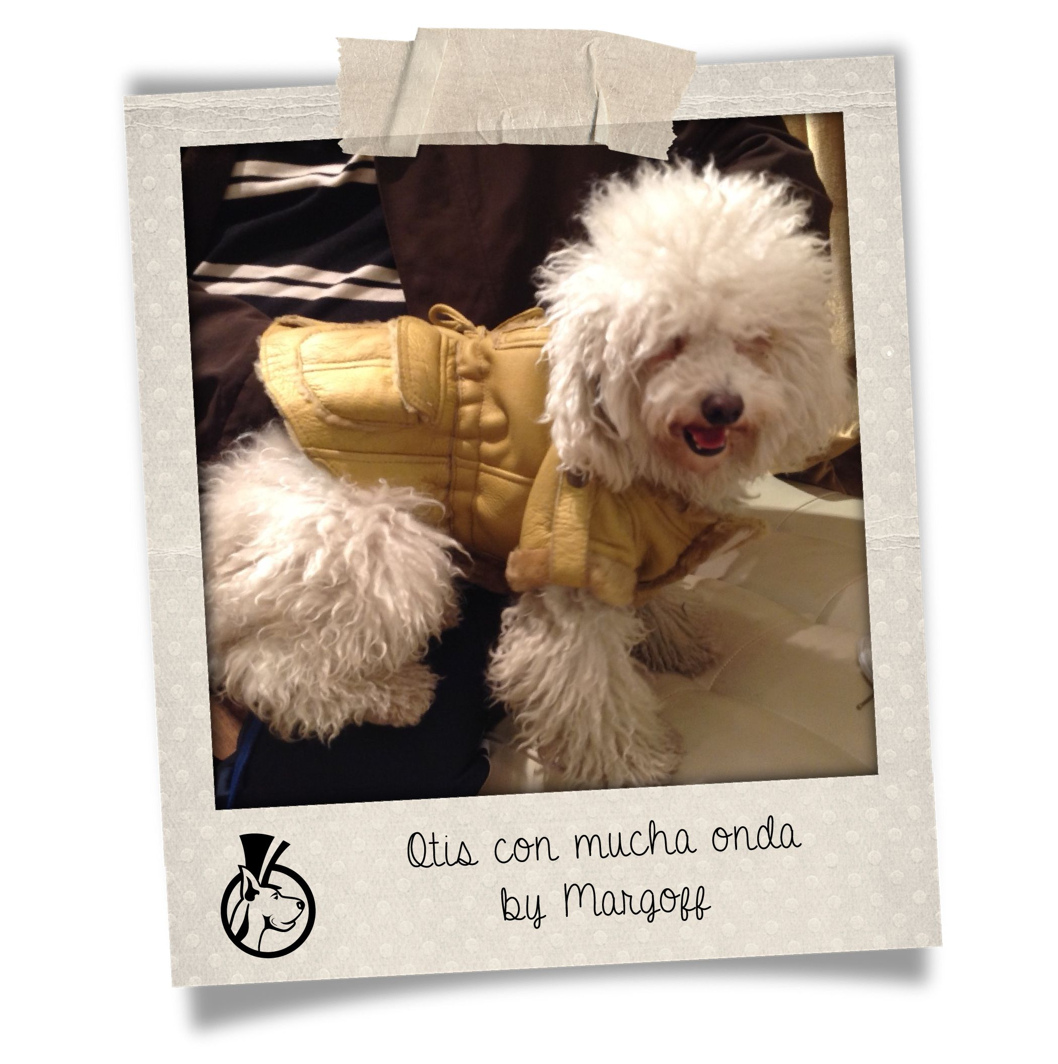 Amigos de Margoff #Haute #Couture for #Pets #Margoff #Dogs #Fashion #Friends
