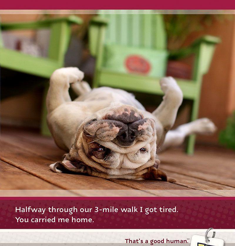 Ohne Worte Bulldog Advertising Werbung Pets Bulldog I Love Dogs