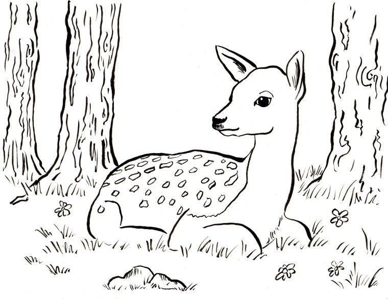 Ausmalbild Reh Mit Kitz - Cartoon-Bild