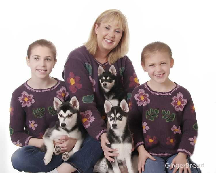 Alaskan Klee Kai Breeders And Book Authors Alaskan Klee Kai Siberian Husky Alaskan Husky