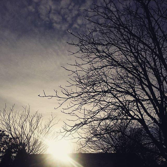冬, 木, シルエット