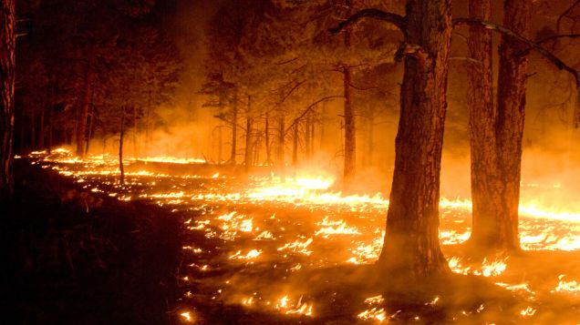 Wildfires Have Already Toasted a Staggering Amount of Land in the US This Year
