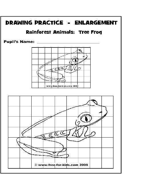 Practice Drawing Pages Of Rainforest Animals Art Classroom Art Worksheets Middle School Art Projects