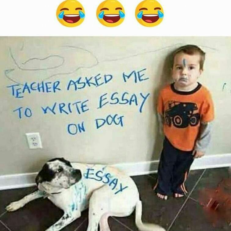 Essay On Health Dog Essay Essay Writing Best Memes Laughing Colors Sample Resume Jokes Thesis Persuasive Essay also Sample Of English Essay Pin By  On Laughing Colours  Pinterest  Dogs Funny And Dog  Reflective Essay On English Class