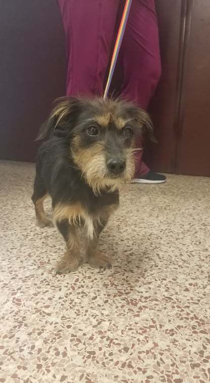 Adopt Connor On Terrier Mix Dogs