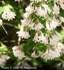 Image result for pink bell shaped flowers hdep forget me not image result for pink bell shaped flowers mightylinksfo Choice Image