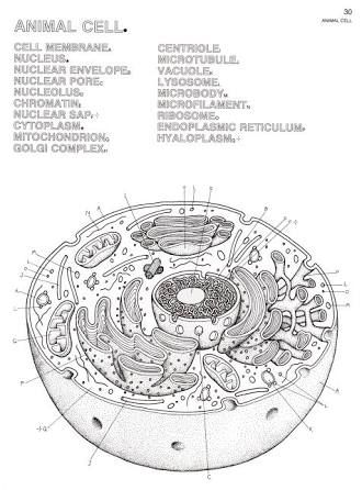 Resultado de imagen para biology drawings color | Biología ...