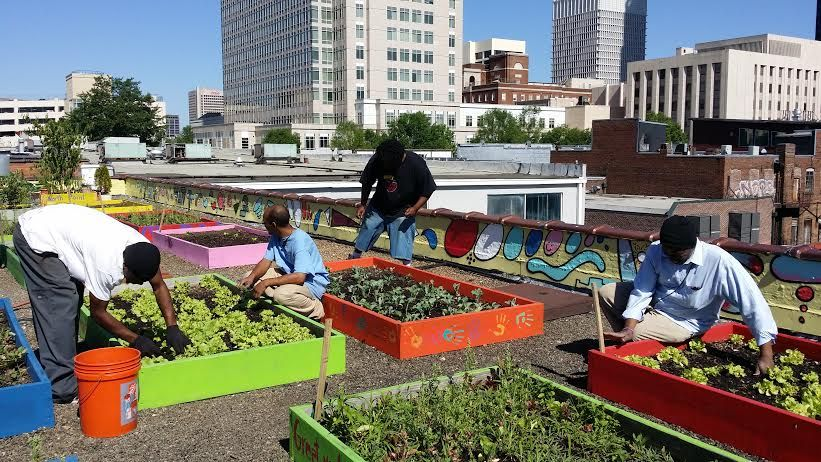 Homeless Plant Massive Organic Rooftop Garden To Feed An Entire Shelter Organic Gardening Organic Plants Rooftop Garden
