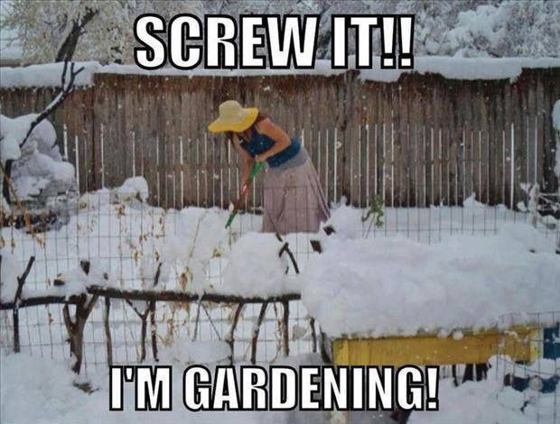 Winter Gardening With Images Gardening Quotes Funny Gardening