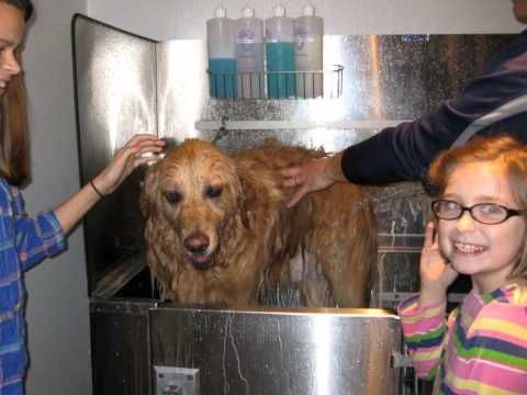 Scrub a pup inc cranston rhode island best do it yourself scrub a pup inc cranston rhode island best do it yourself grooming also professional grooming is available by appointment solutioingenieria Choice Image