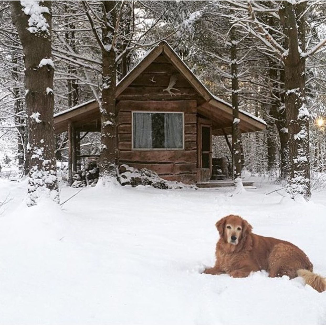 rentals vrbo cottage cabin boyne rent log cabins relaxing scenery traverse northern place mountain in lake michigan rustic at beautiful higgins nce and city