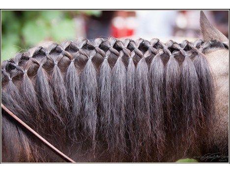 Pferdefrisur Google Suche Horse Braiding Horse Hair Braiding Horse Mane Braids