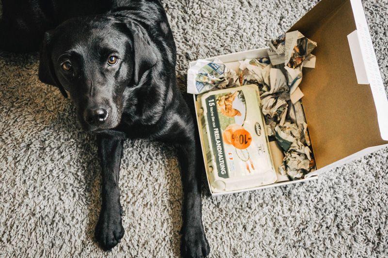 Spielzeug Fur Den Hund Mit Diesem Diy In Sekunden Selbst Gemacht Spielzeug Hund Hundespielzeug Spielzeug