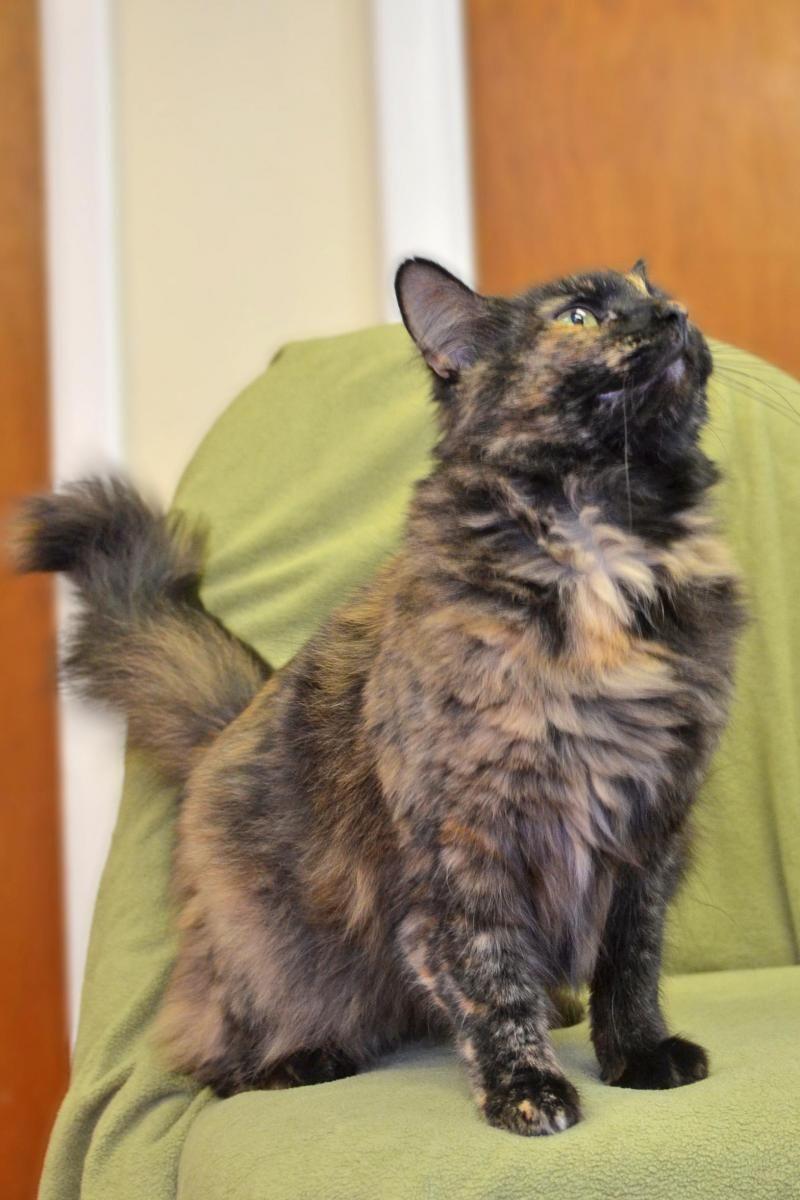 12+ Missouri city animal shelter images