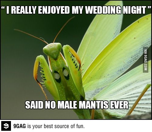 It Will Be Great They Said With Images Praying Mantis Pray Greatful