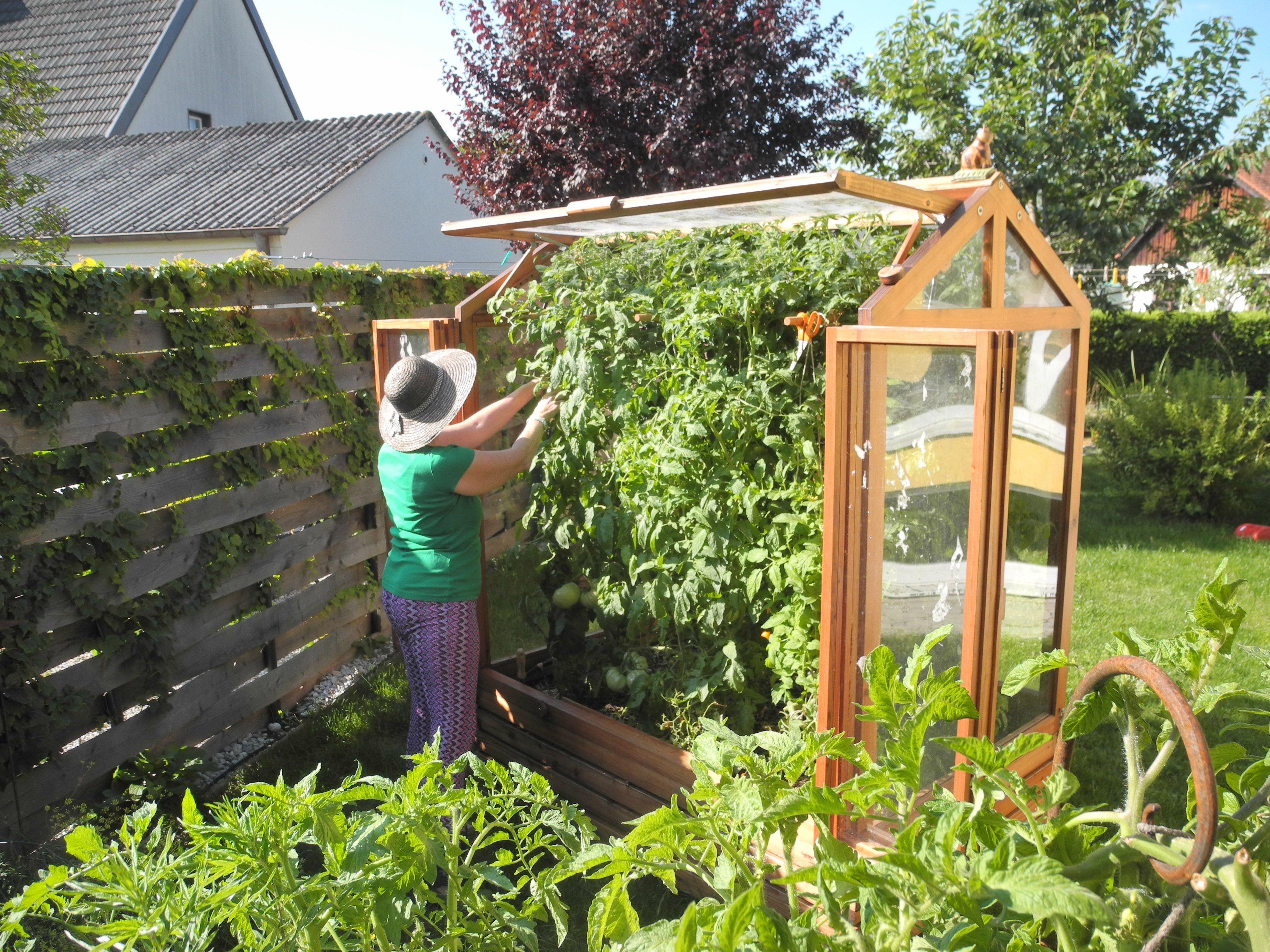 Warum ein Tomatenhaus? Vorteile des Kleingewächshauses