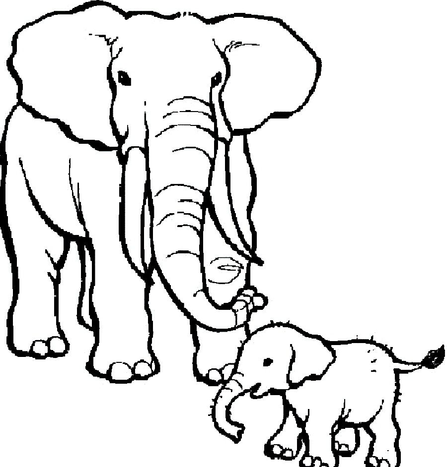 Circus Elephant Colouring Pages Zoo Animal Coloring Pages