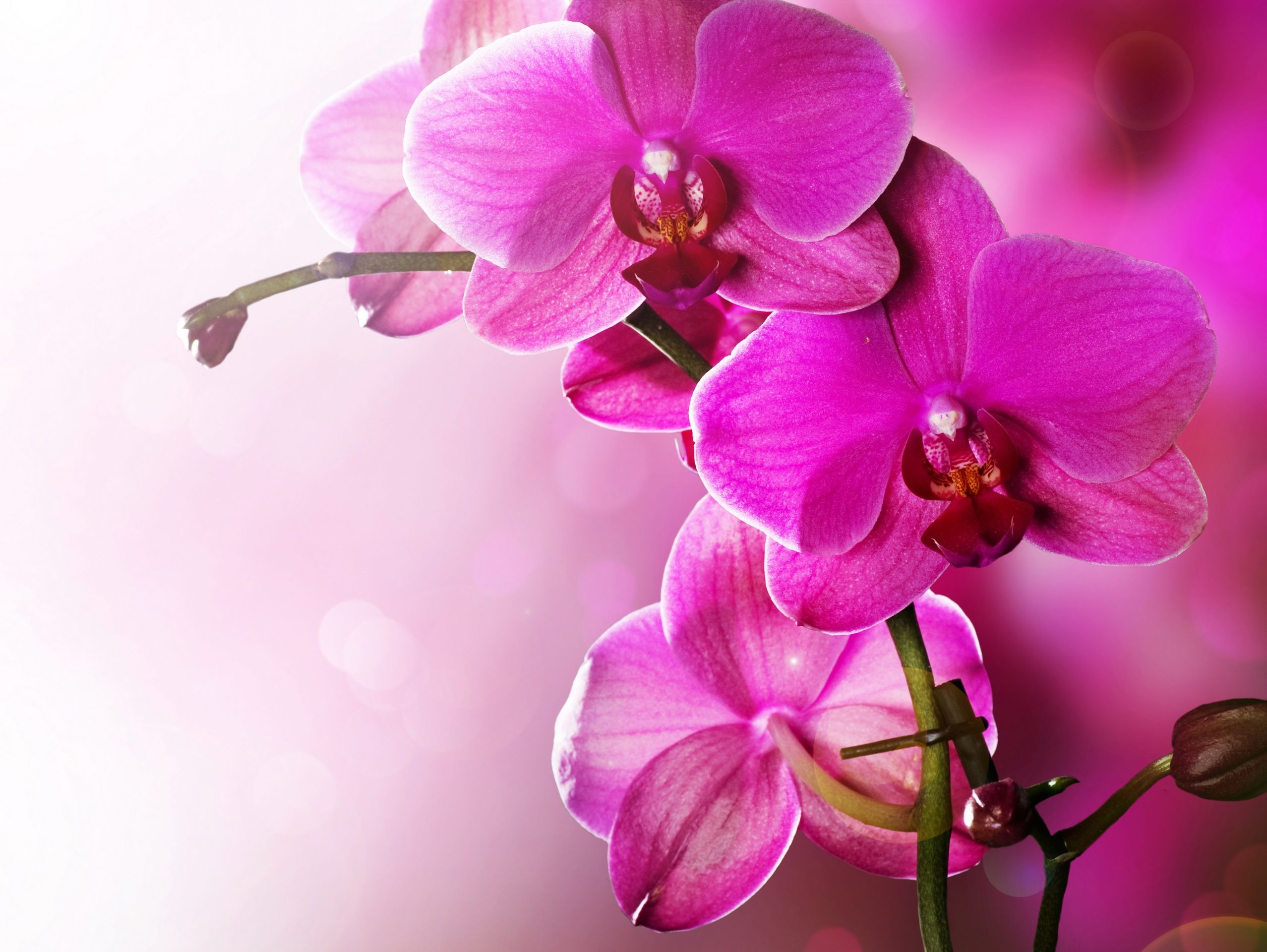Открытка с орхидей, картинки