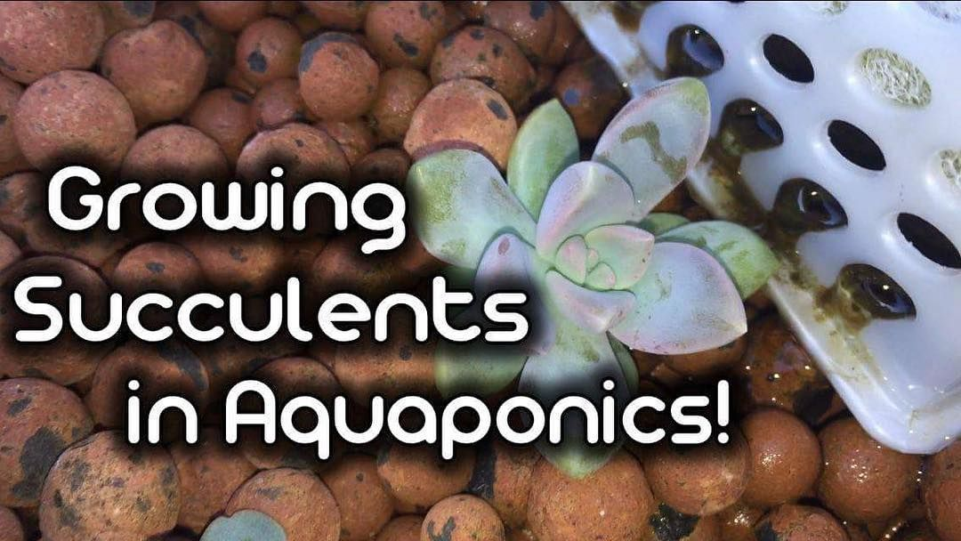 Video Link In My Bio Hey Guys I Have Been Growing Succulents