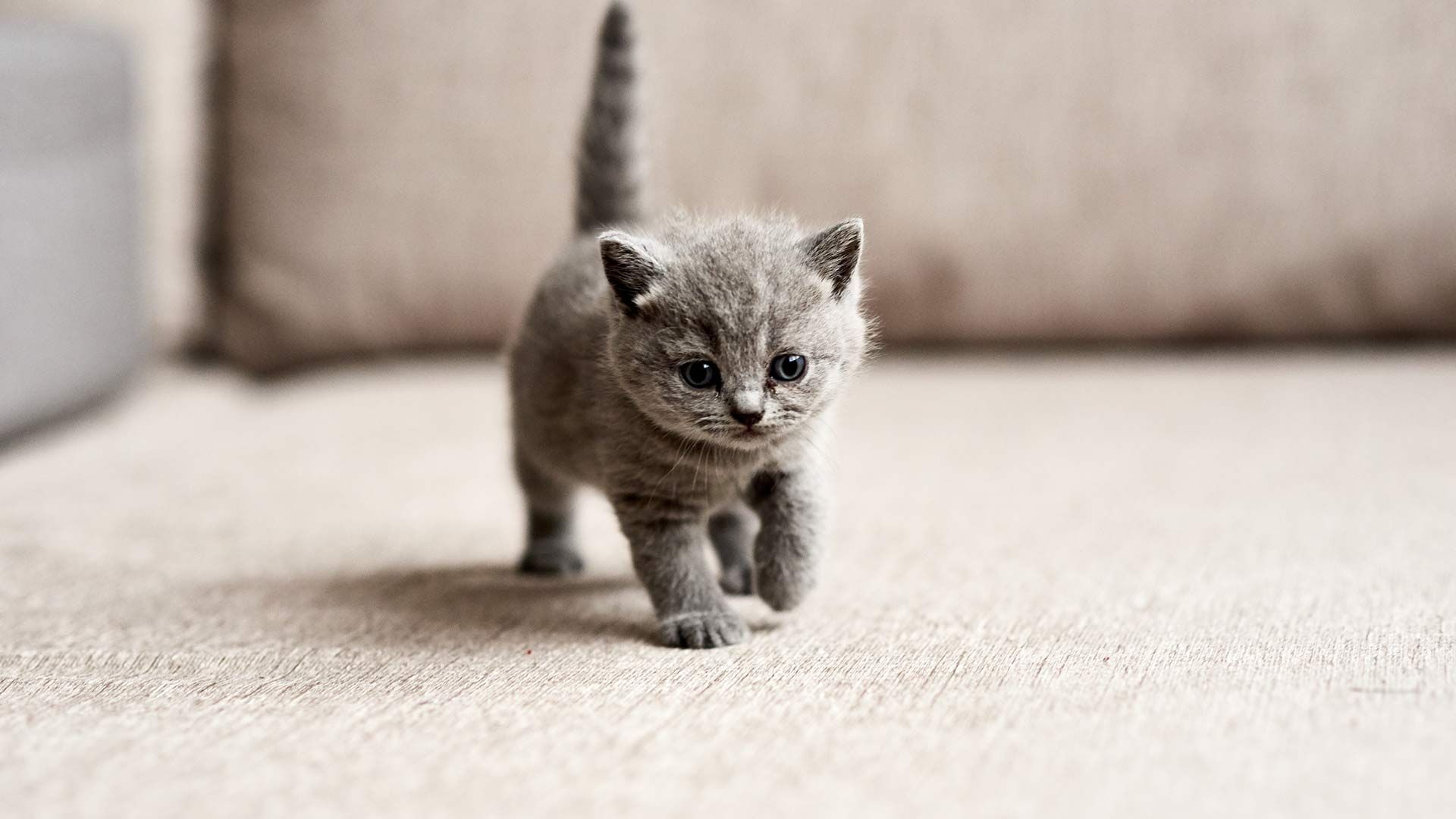 Everything You Need For Your New Kitten Cat Breeds With Pictures Kittens Cutest Kitten Images