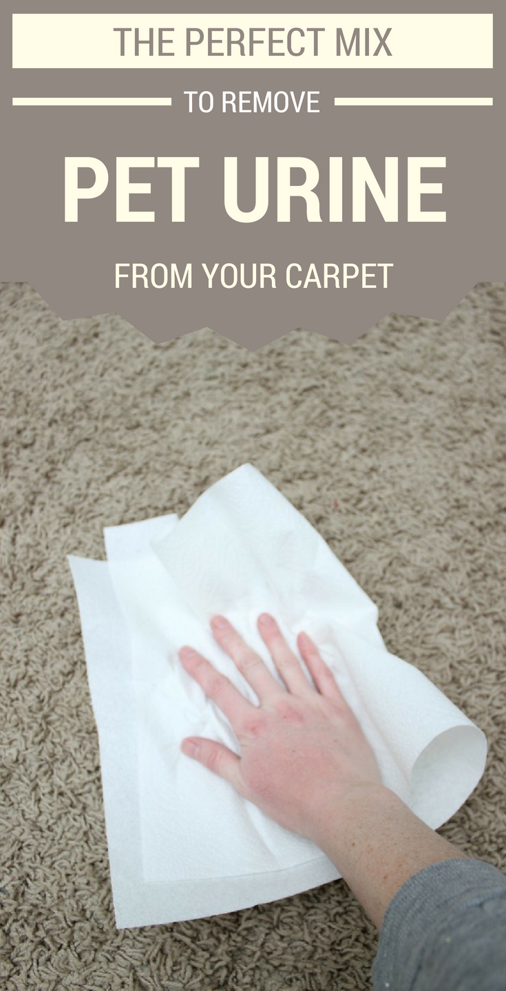 Carpet Cleaning Is Now Rocket Science Carpet Stain