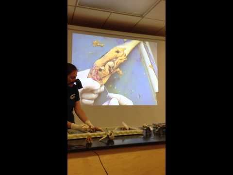 Perch Dissection- Coe - YouTube