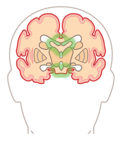 In brian quiz from the university of illinois students become in brian quiz from the university of illinois students become brain specialists as they learn about the different parts and how they work together ccuart Images