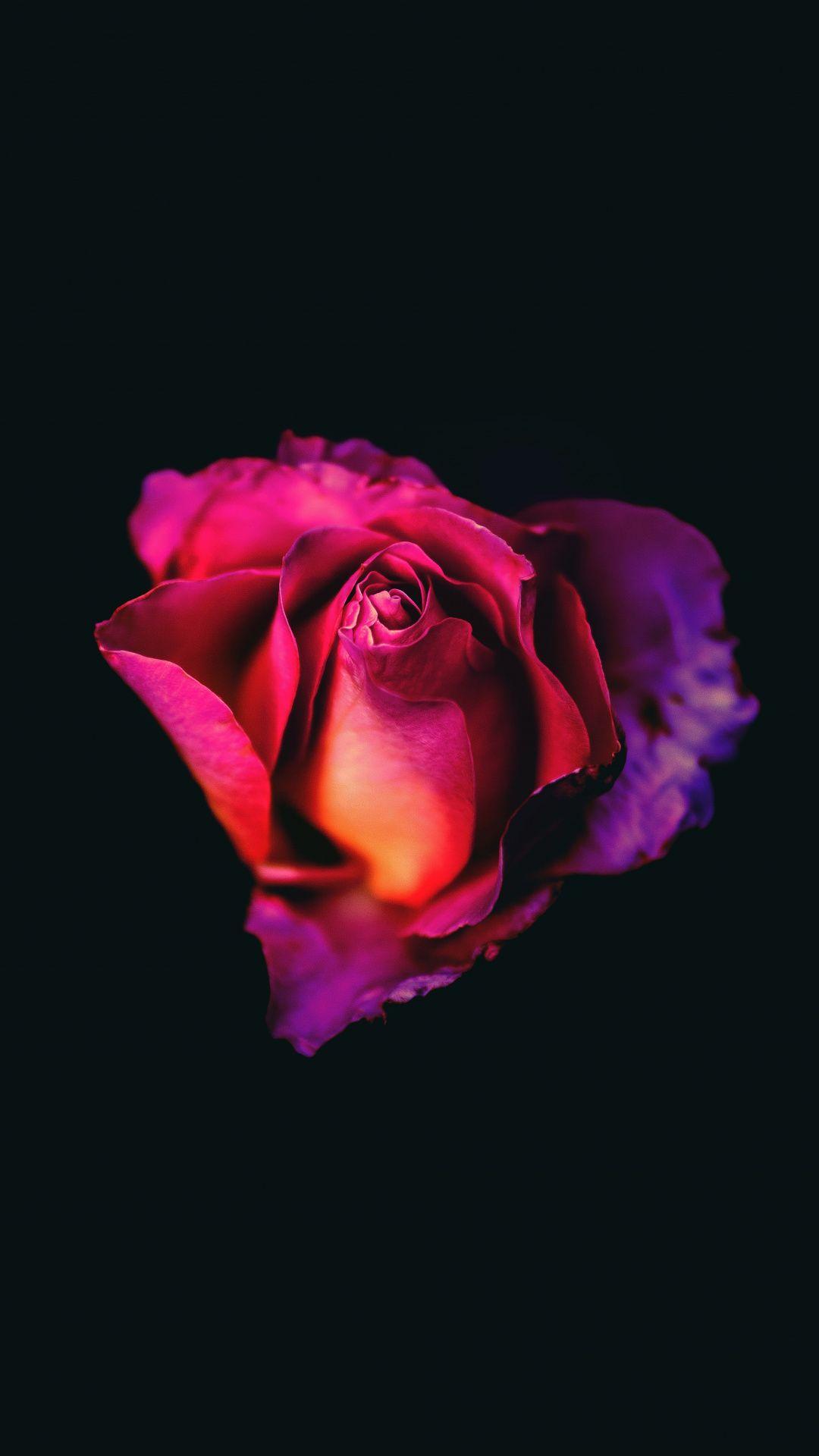 Rose Bud Pink Flower Dark Portrait 1080x1920 Wallpaper Rose Wallpaper Red Roses Wallpaper Wallpaper Iphone Roses
