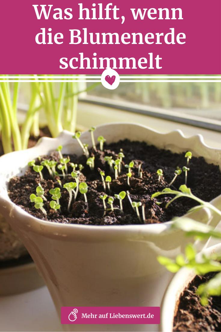 Blumenerde schimmelt: SOS-Tipps und Hausmittel, die helfen