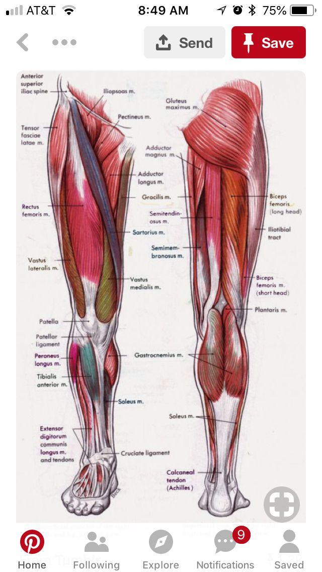 Pin By Shermin On Medical Pinterest Muscle Anatomy Anatomy And